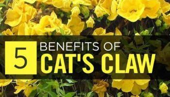 Best Cat's Claw Supplements – Top 10 Brands Reviewed for 2019