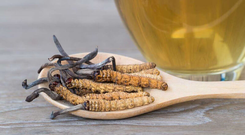 Best Cordyceps Supplements – Top 10 Brands Reviewed for 2019