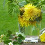 Best Dandelion Root Supplements – Top 10 Brands Reviewed for 2019