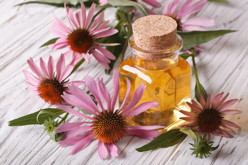 Best Echinacea Supplements – Top 10 Brands Reviewed for 2019