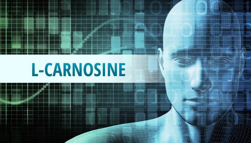 Best L-Carnosine Supplements – Top 10 Brands Reviewed for 2019