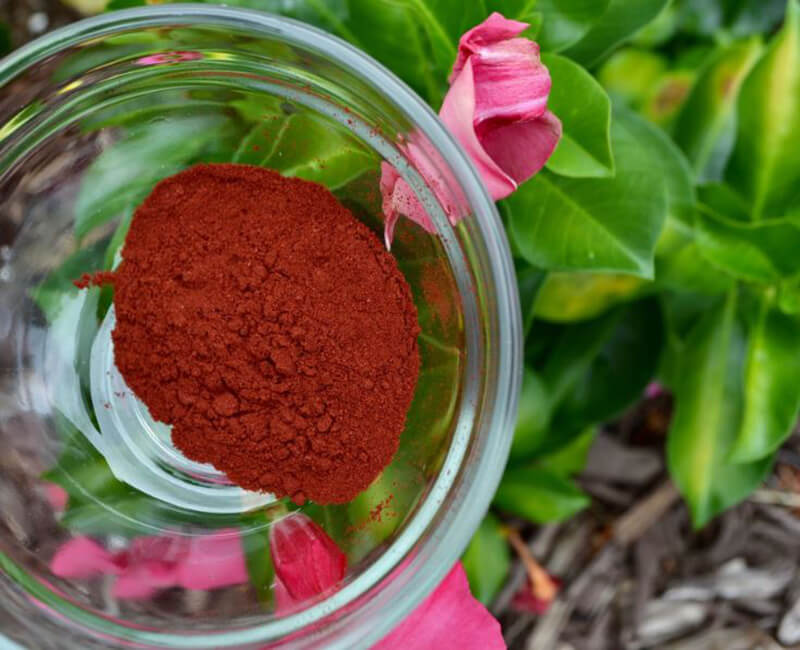 Why Trust Us? Best Astaxanthin Supplements – Top 10 Brands Reviewed for 2019