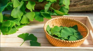 The 11 Best Ginkgo Biloba Supplements of 2020